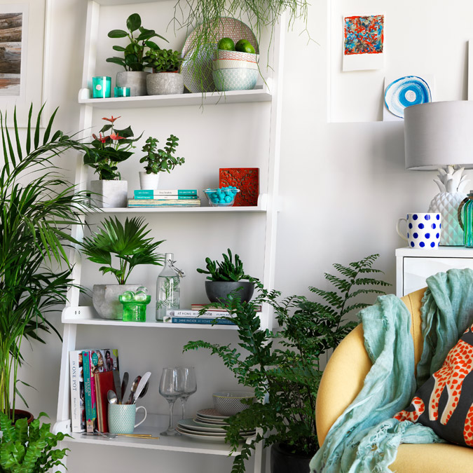 White ladder storage unit with loads of bright green plants.